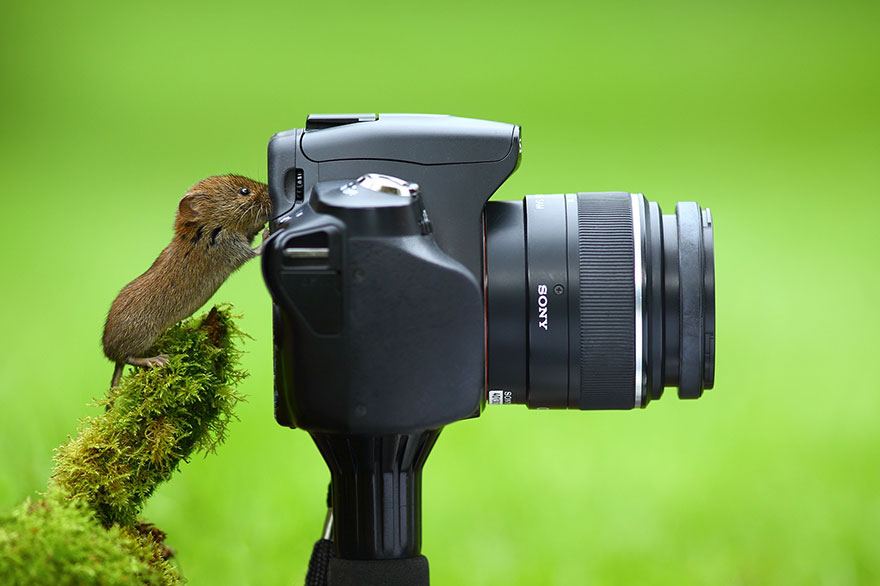 16-animals-with-a-passion-for-photography-13