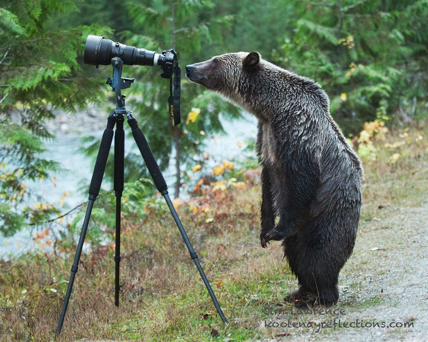 16-animals-with-a-passion-for-photography-9