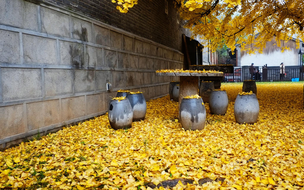 From-1400-years-turns-a-garden-in-a-beautiful-carpet-of-golden-leaves-2
