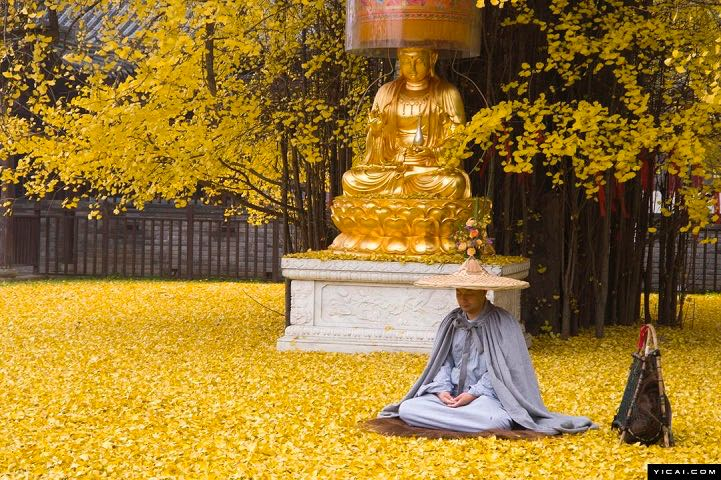 From-1400-years-turns-a-garden-in-a-beautiful-carpet-of-golden-leaves-9