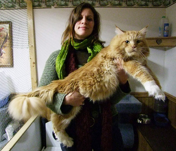 What Is The Biggest Cat In World Best Cat