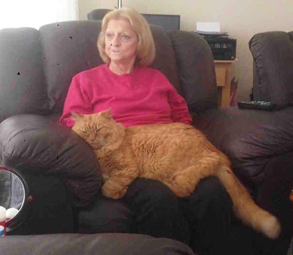 The-biggest-cats-in-the-world-4