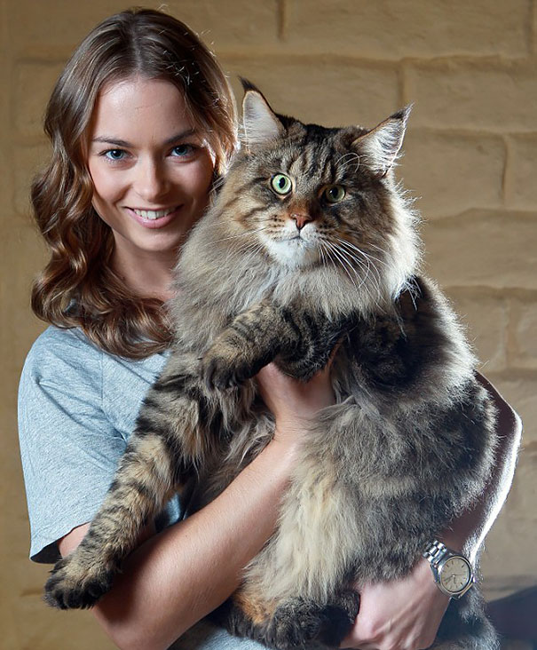 The-biggest-cats-in-the-world-6