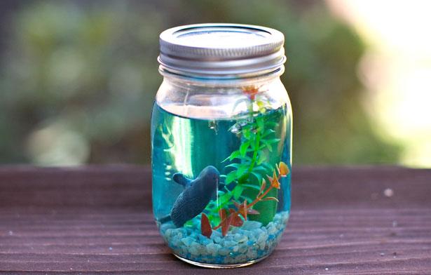 28 Mason Jar Aquarium