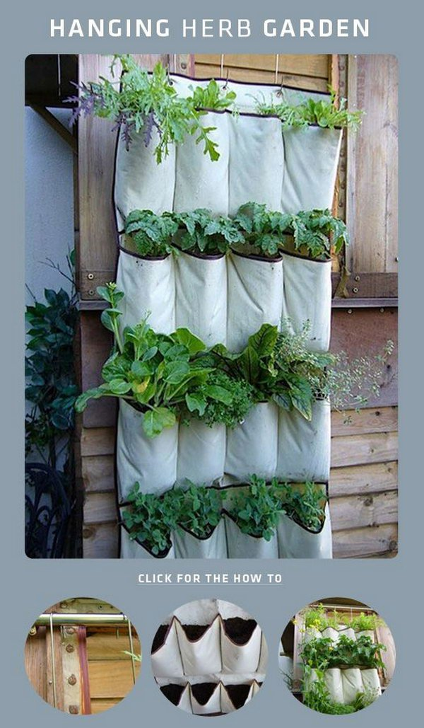 10 DIY Shoe Rack Hanging Herb Garden