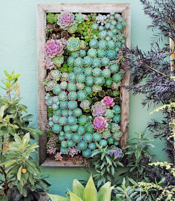 30 DIY Framed Vertical Succulent Planter