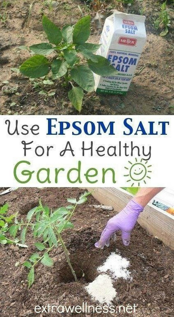 8 Use Epsom Salt at the Planting Stage to Aid Seed Germination
