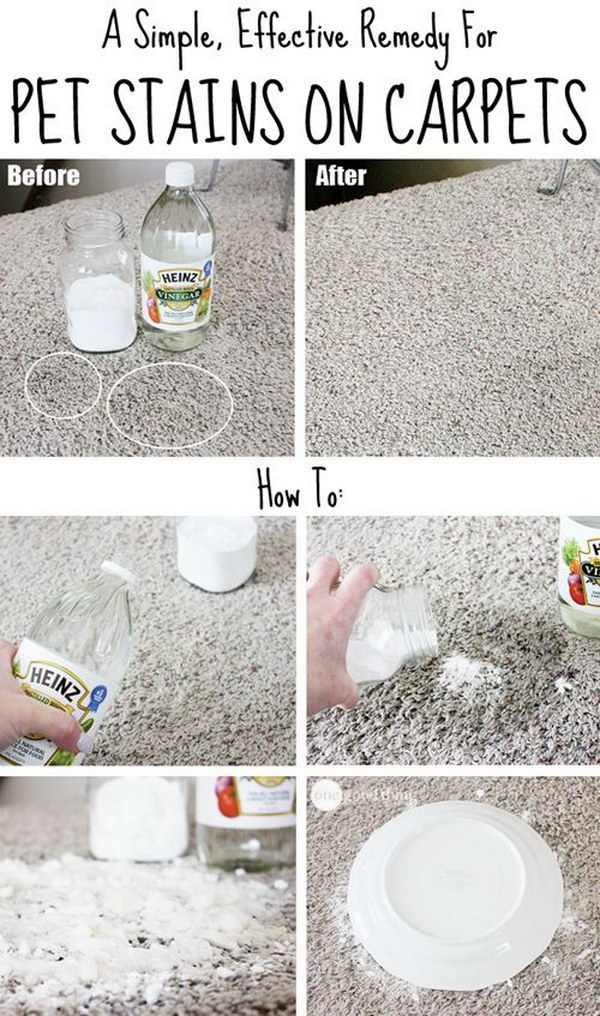 1 A Simple Effective Remedy For Pet Stains On Carpets