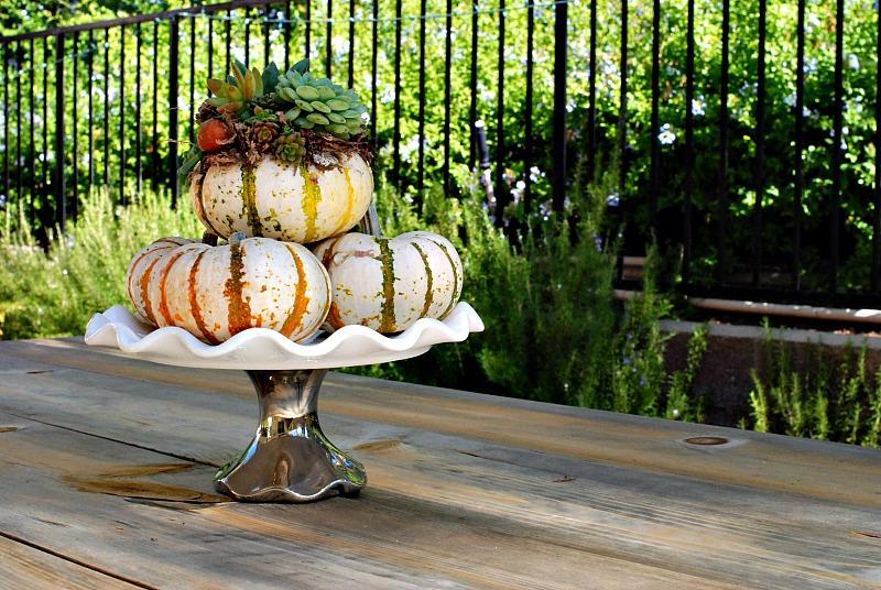 31 Pumpkins and Succulent Centerpiece