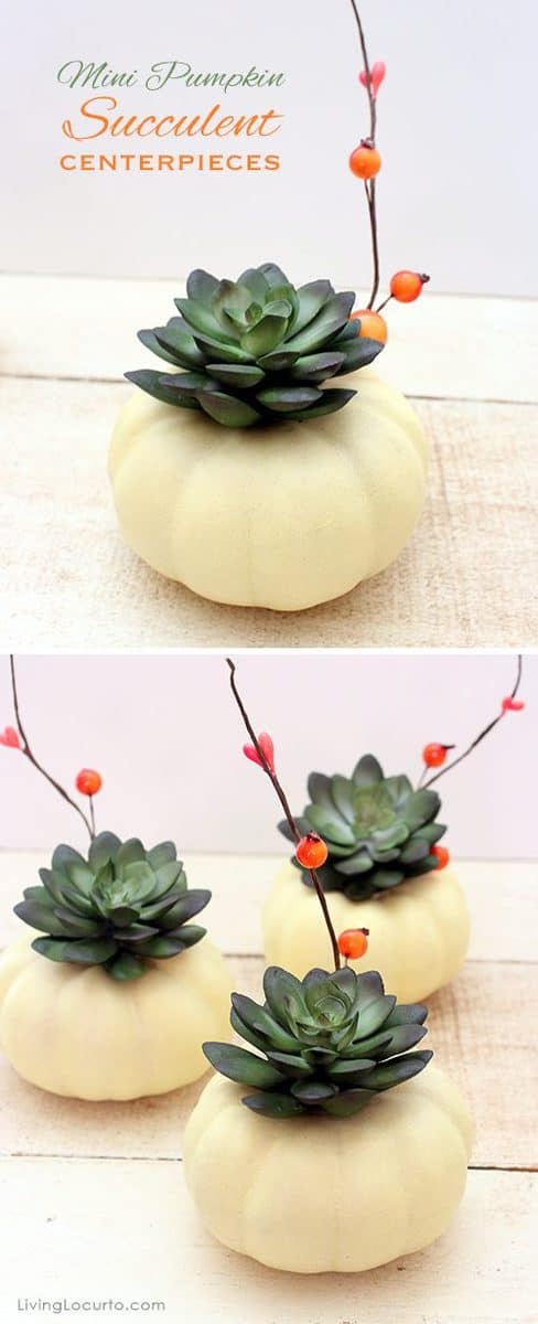 38 Mini Pumpkin Succulent Centerpiece
