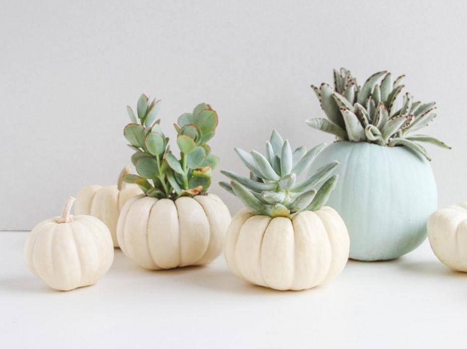 25 DIY Mini Pumpkin Planters
