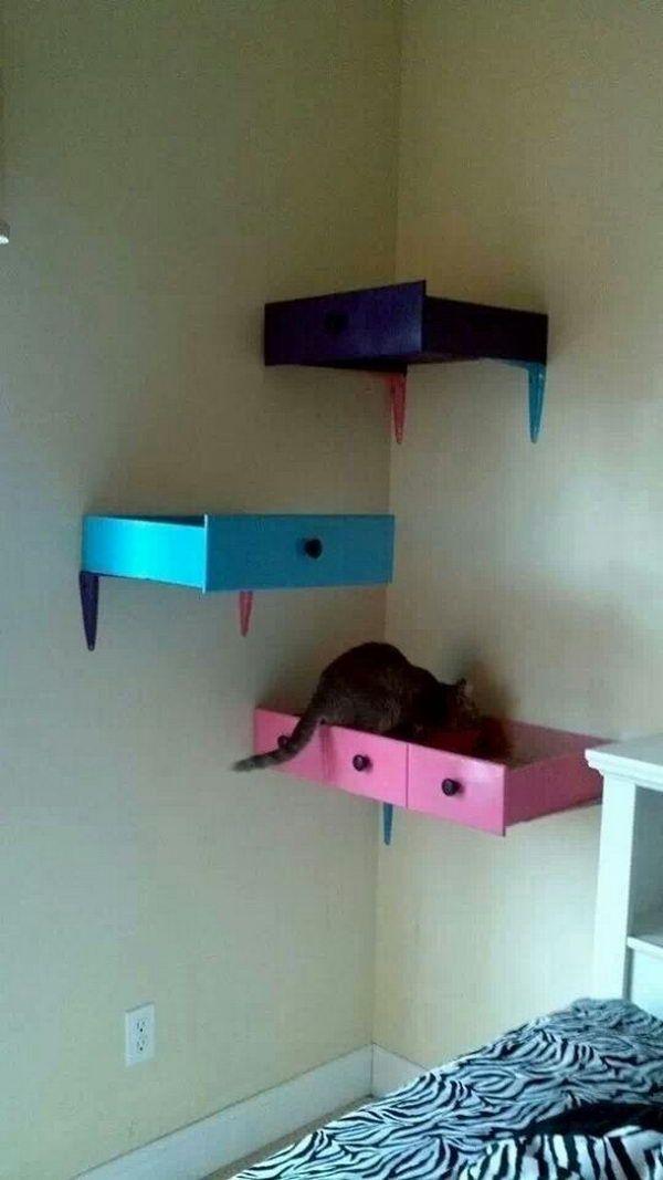 29 DIY Cat Shelving