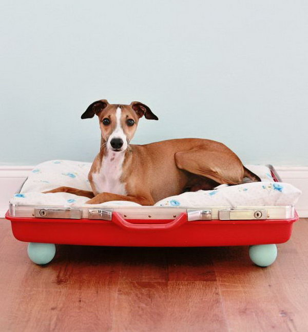 4 DIY Suitcase Pet Bed