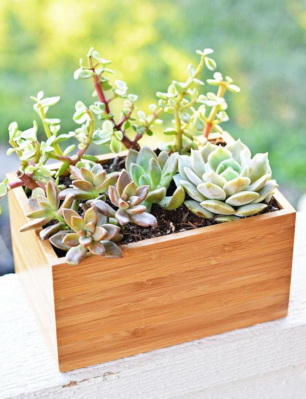 20 Bamboo Planter Box
