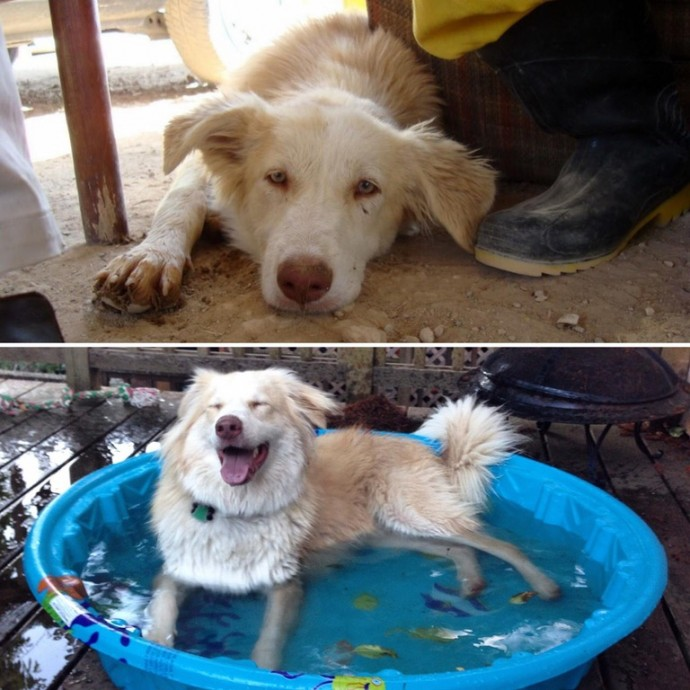 Amazing Transformations Of Dogs And Cats Before After - 27 amazing transformations of dogs and cats before after adoption