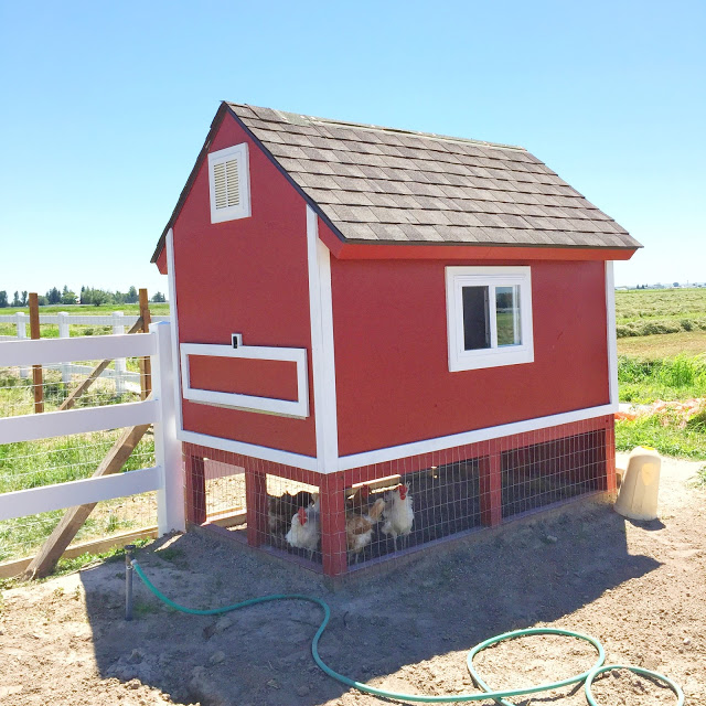 3 Creative DIY Chicken Coop Designs