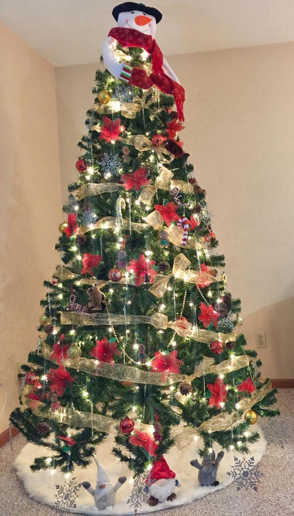 24 North Valley Spruce Tree