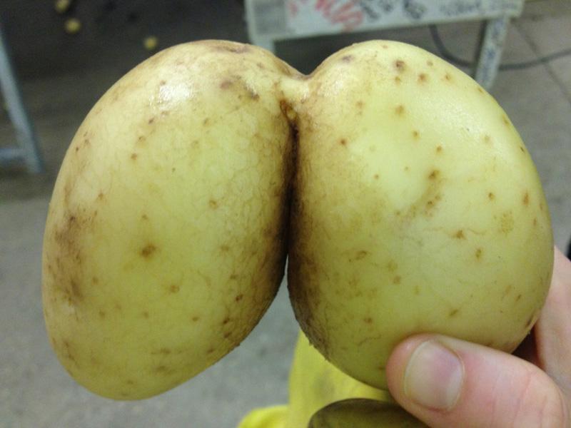 Funny potato 3