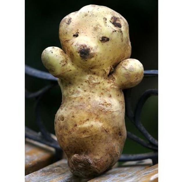 Funny potato 4
