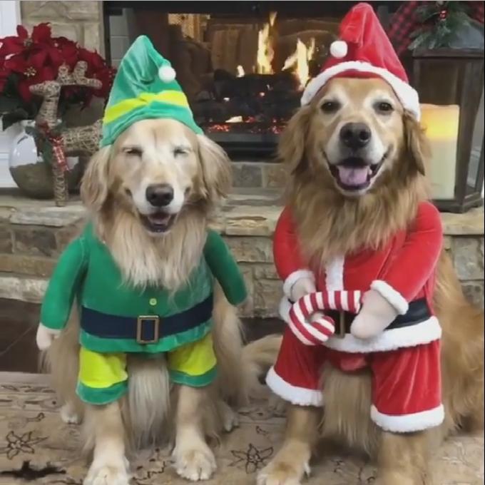 christmas dogs 1
