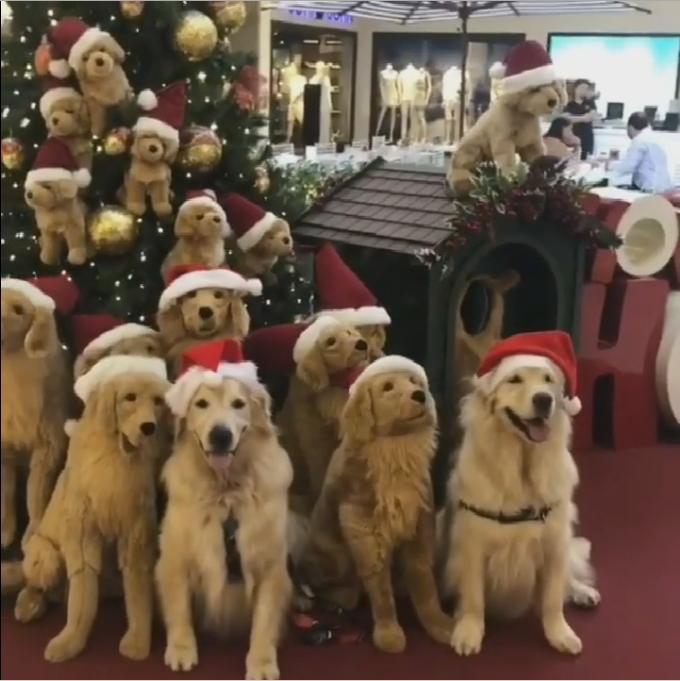 christmas dogs 2