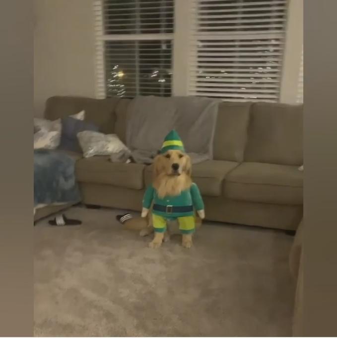christmas dogs 3