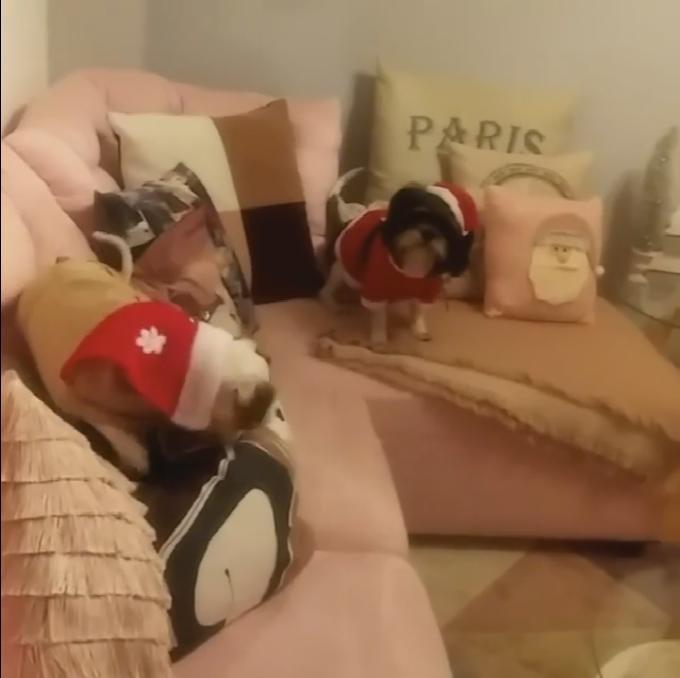 christmas dogs 4