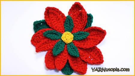 2 The Poinsettia Flower