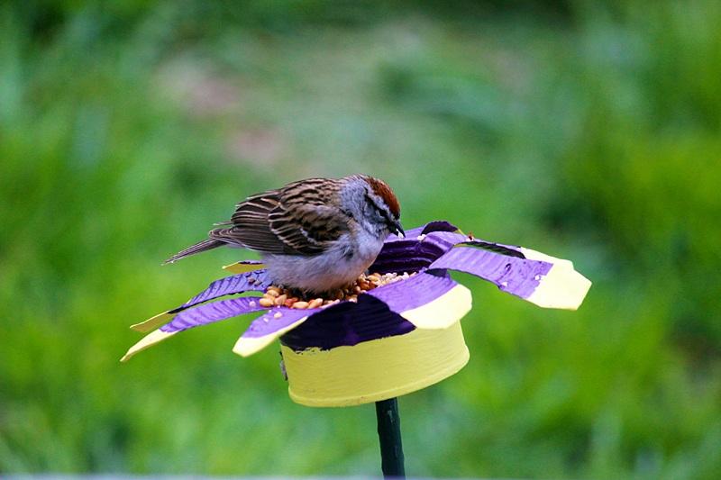31 Tin Can Flower Bird Feeder