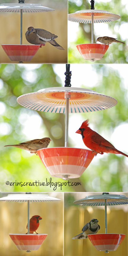 3 Bird Feeder Made with Just a Plate