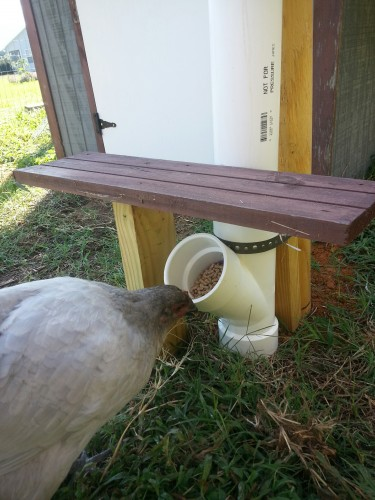 1 PVC Chicken Feeder