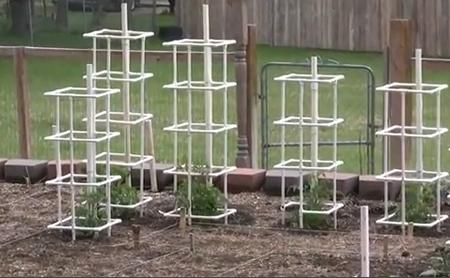 10 Build PVC tomato cages