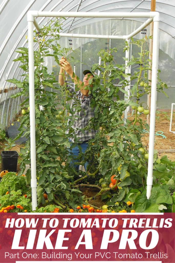 14 Easy PVC Tomato Trellis