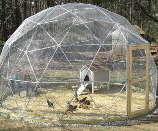 20 Geodesic Chicken Dome