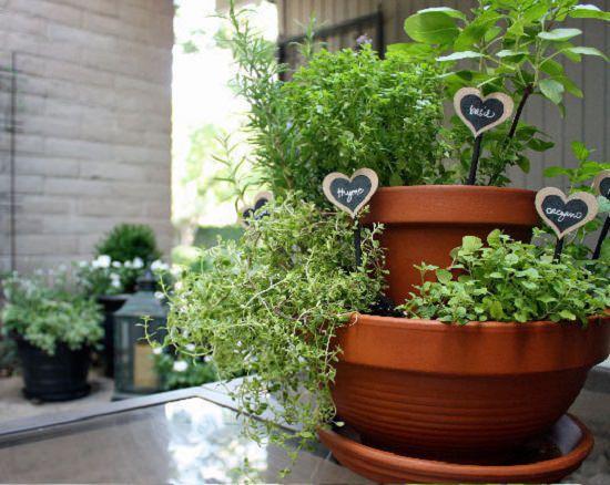 25 Beginner Plant Marker