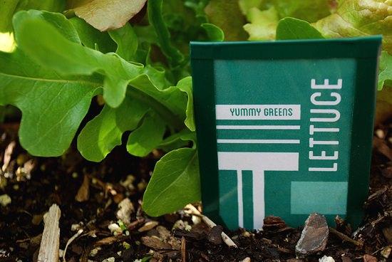 27 DIY Garden Seed Marker