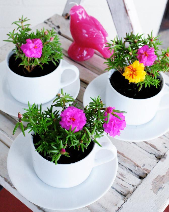 12 Tea Cup Planter Pots