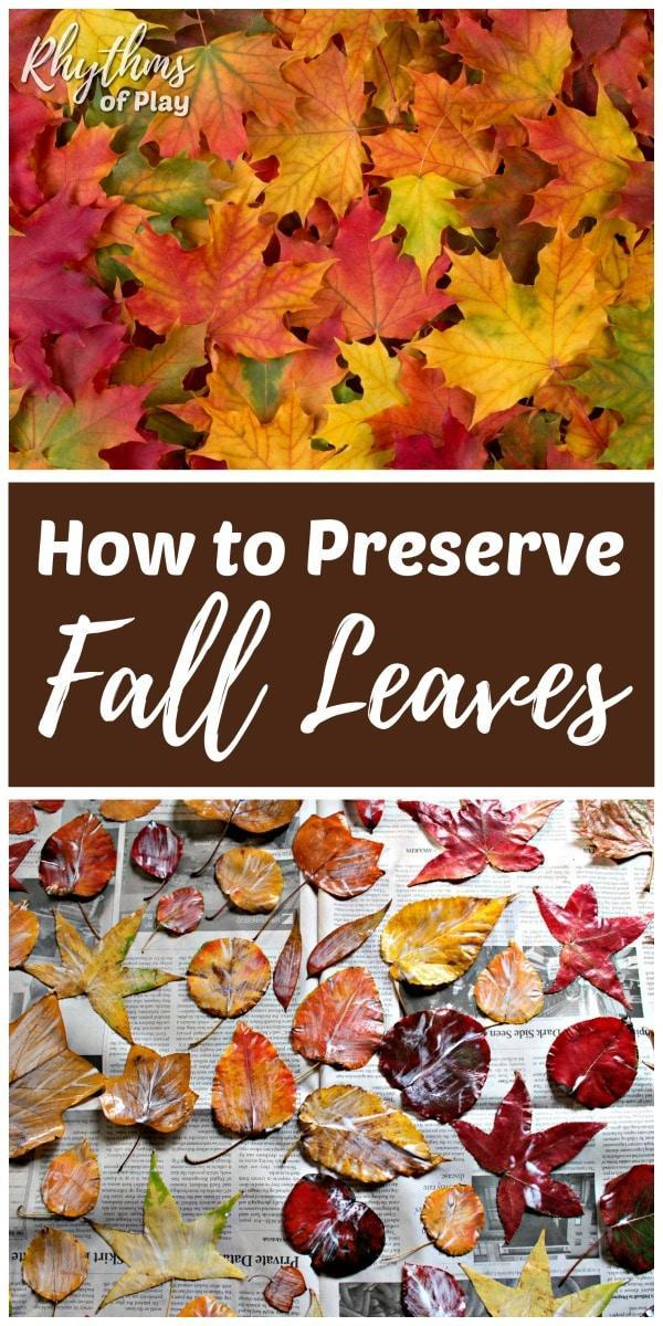 2 How to Preserve Leaves